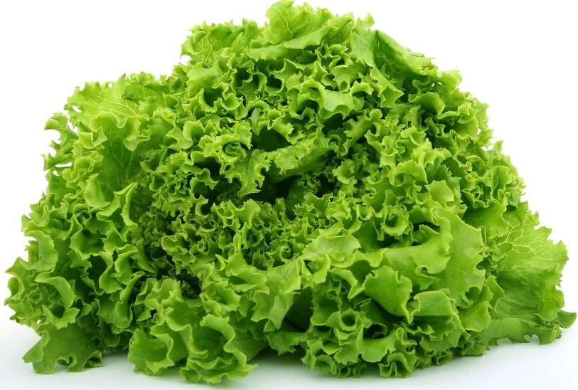 Lettuce to promote sleep